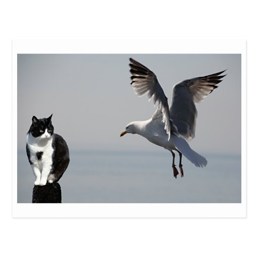 Cat and Seagull, Portpatrick, Scotland, UK Post Cards