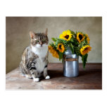 Cat and Sunflowers Post Cards