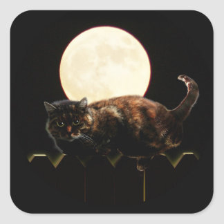 Cat and the Full Moon Square Sticker