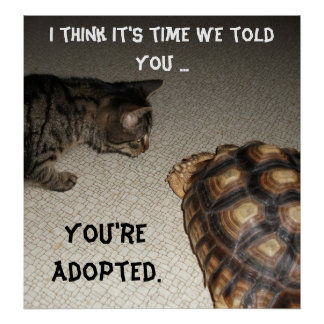 "Cat and Tortoise - ""You're Adopted"" Posters"