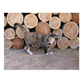 Cat and woodpile postcard