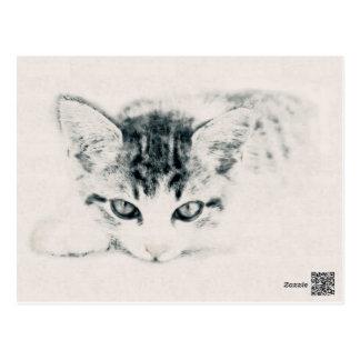 Cat, animal - design, illustration postcard