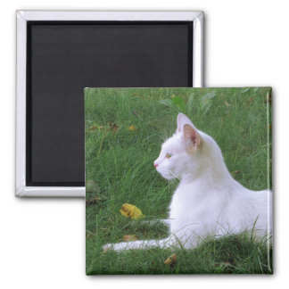Cat Art Photo Magnet, White Kitten Square Magnet