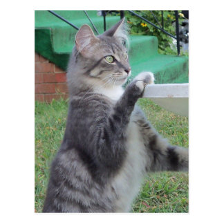 Cat At Bird Bath Postcard