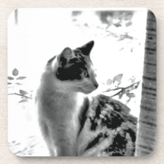 Cat at the window drink coaster
