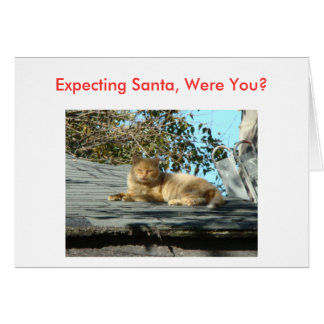 Cat, Bah Humbug Card