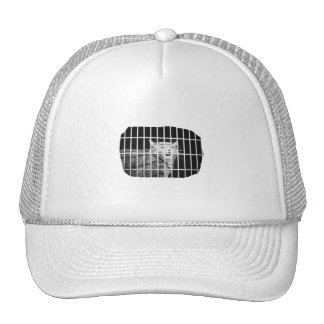 Cat behind bars with mouth open mean kitty cap