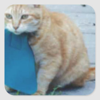 Cat Bib Stickers