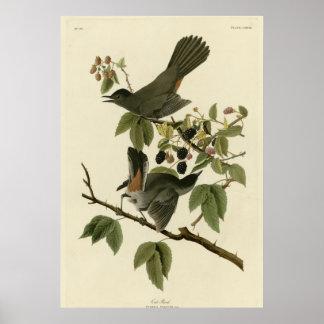 Cat Bird Posters
