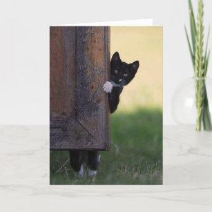 Cat blank card - sympathy, thank you, birthday!