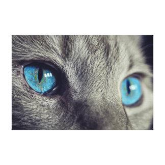 Cat Blue Eye Canvas Print