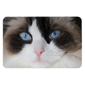 Cat Blue-Eyed Darling Rectangular Photo Magnet
