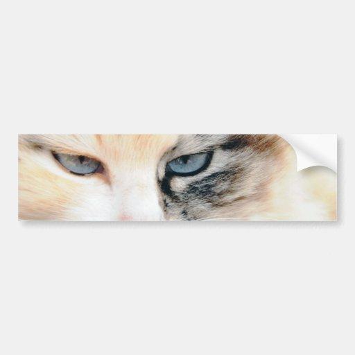 Cat Bumper Stickers