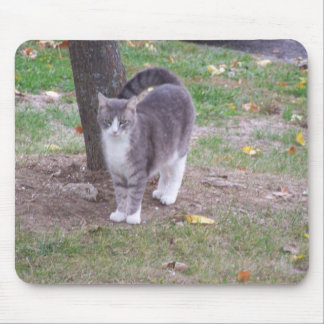 Cat By a Tree, Autumn, Mousepad