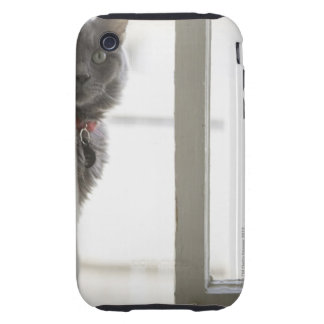 Cat by window tough iPhone 3 case