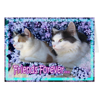 Cat Cards,Forever Friends Card