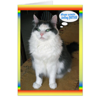 Cat Cards,Funny Get well Card