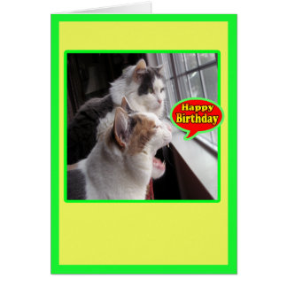 Cat Cards,Funny Happy Birthday Shout Out Card