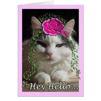 Cat Cards,Hey Hello Card