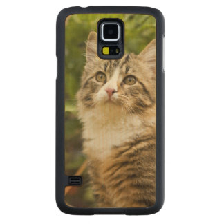 Cat Carved Maple Galaxy S5 Case