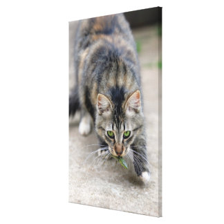 cat caught a lizard canvas print