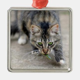 cat caught a lizard christmas ornament