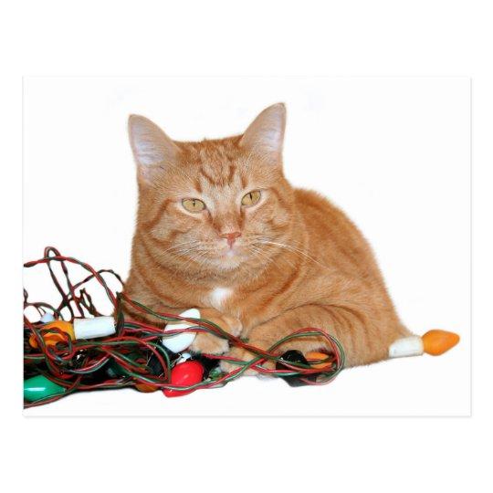Cat Chrishtmas lights Postcard