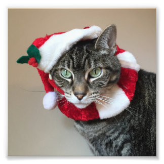 Cat Christmas Card Photo Print