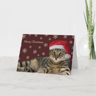 tabby cat cards zazzle uk