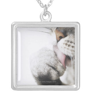 Cat cleaning paw, close-up silver plated necklace