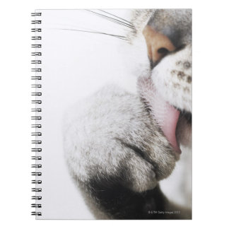Cat cleaning paw spiral notebook