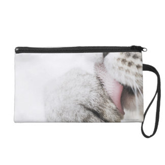 Cat cleaning paw wristlet