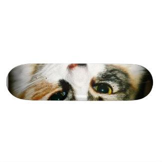 Cat Closeup Skate Board
