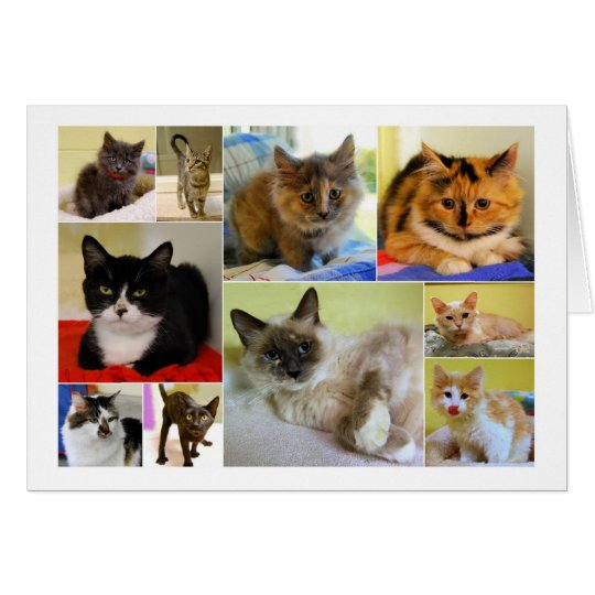Cat Collage Birthday Card