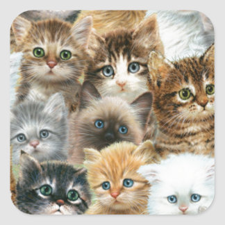 Cat collage square sticker