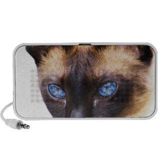 cat confidence peace calm laptop speaker
