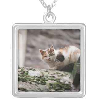 Cat crouching on rock wall square pendant necklace