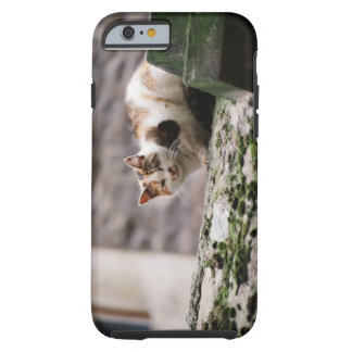 Cat crouching on rock wall tough iPhone 6 case