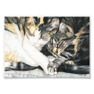 Cat Cuddle Art Print Photographic Print