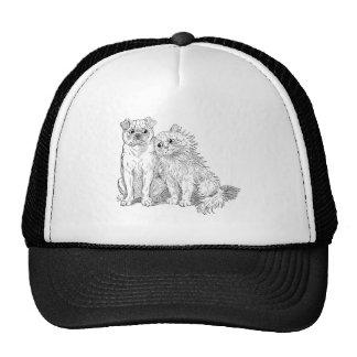 Cat Cuddles Up to Dog Cap