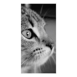 cat custom photo card