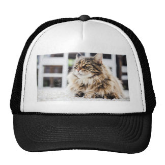 Cat deep in thought trucker hat