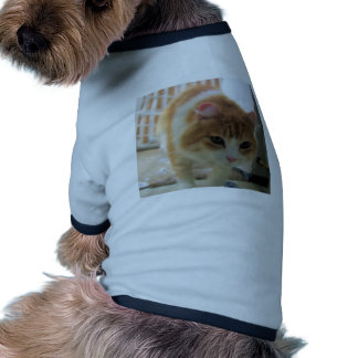cat pet clothing