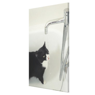 Cat Drinking Water Dripping From A Tap Gallery Wrap Canvas