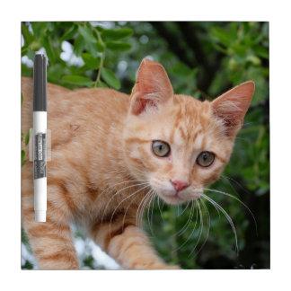 Cat Dry Erase Whiteboards