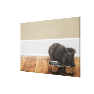 Cat eating from bowl canvas print