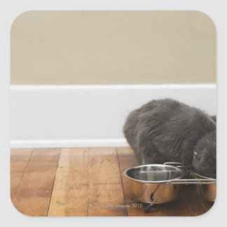 Cat eating from bowl square sticker