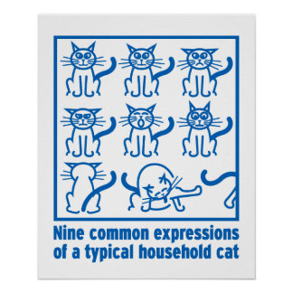 Cat Expressions poster