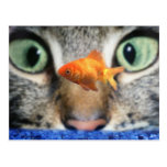Cat Eyeing Up A Goldfish Postcard