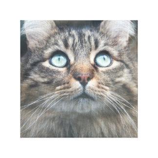 Cat eyes 1 canvas print